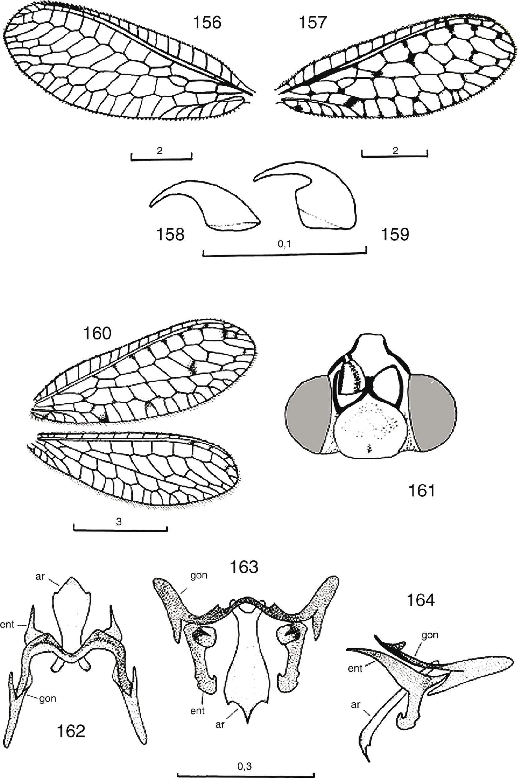 Los Crisópidos De La Península Ibérica Y Baleares Insecta